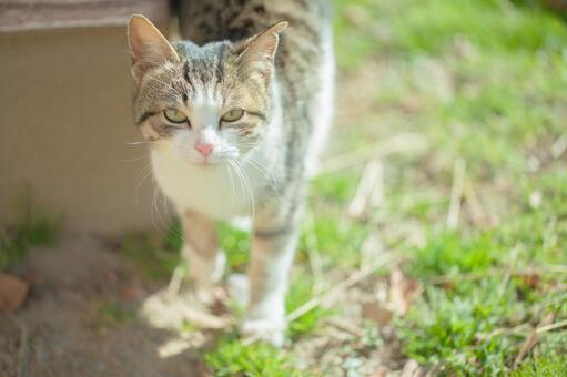 Cat walk 10