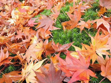 Background material Leaves of scattered autumn leaves 5