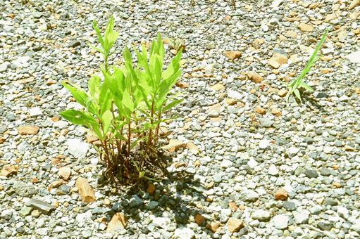 Summer grass of dry ground # 11