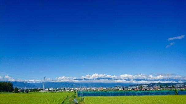 푸른 하늘 논