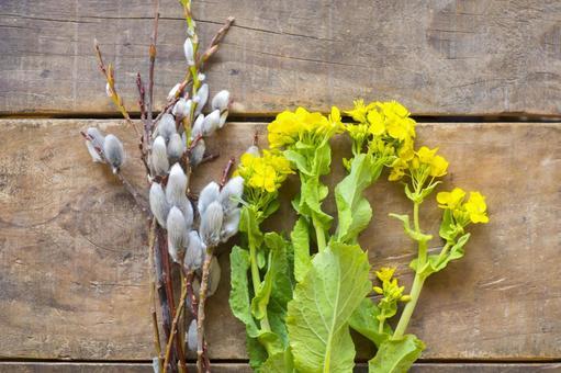 유채 꽃과 갯버들