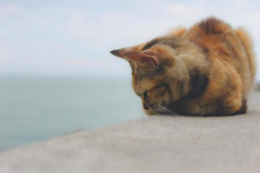 바다와 도둑 고양이