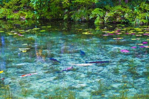 기후현 모네의 연못