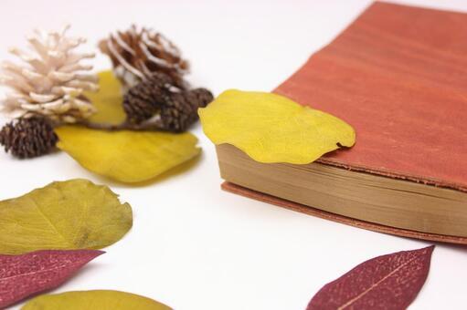 수첩과 낙엽 3