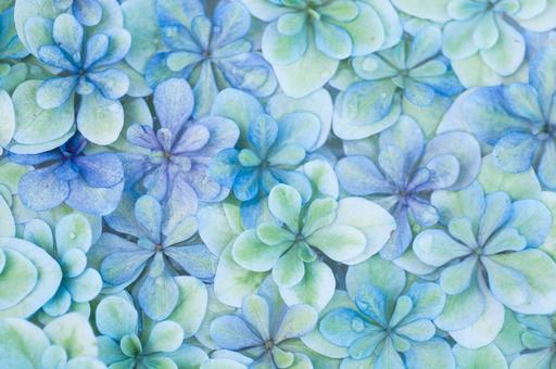Floating hydrangea blue
