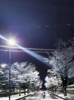 Winter roadside trees