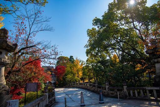 京都 大谷本廟 円通橋の紅葉