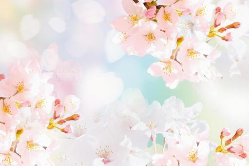 벚꽃이 무성한