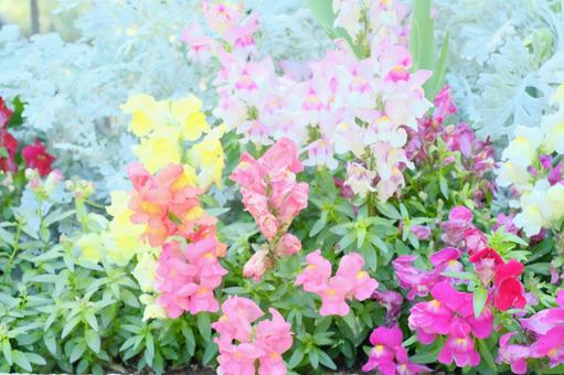 봄의 다양한 설치 금어초