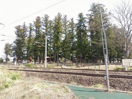 후쿠시마시 미야시로 정 히에 신사 철도 방풍림 삼나무