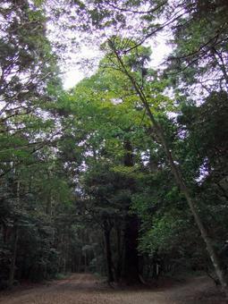 Forest break point ②