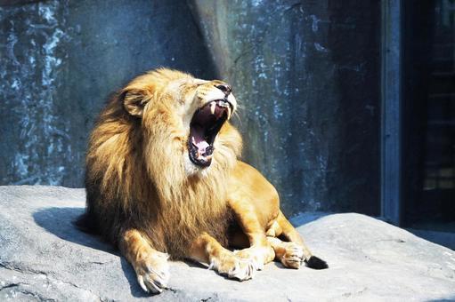 Popular in zoos