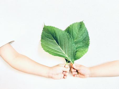 Leaf heart ♡
