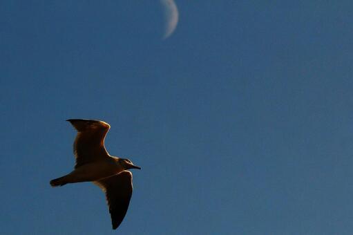 달이 나오는 하늘을 나는 새