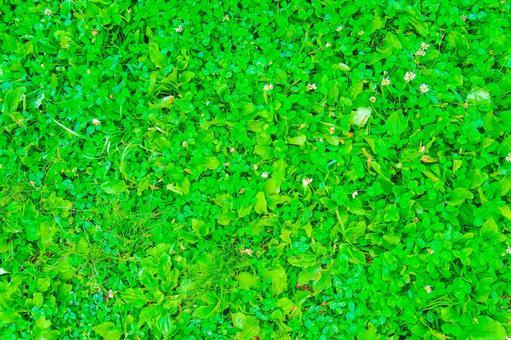 네 잎 클로버 찾을 수 있습니까? 레벨 3 (오른쪽에 있습니다)