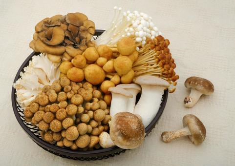 Assorted mushrooms mushrooms