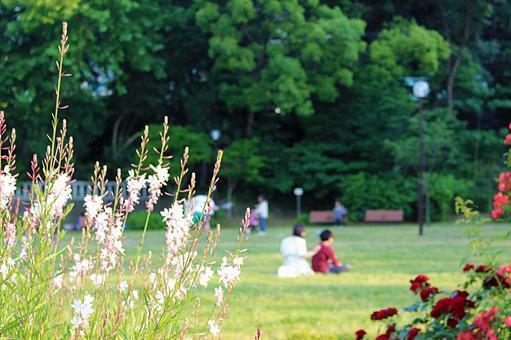 A peaceful park and a couple