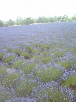 치유의 밭의 풍경
