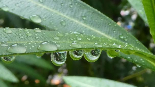 녹색과 물방울