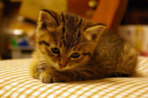 Question cat lacco 26