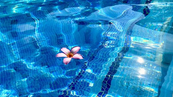 Pink flowers floating in a tropical pool