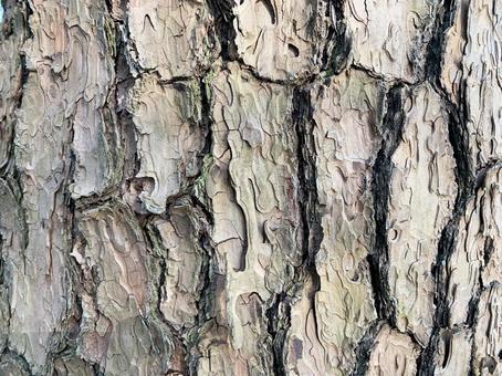 樹皮木材紋理
