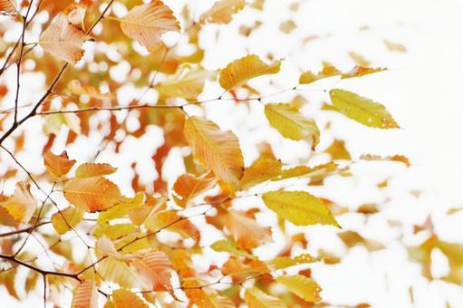 단풍이 든 나뭇잎