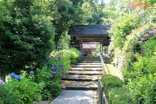 Hydrangea Temple (Kanazawa City, Honkoji Temple)