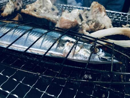 pacific saury saury autumn sword fish grilled BBQ