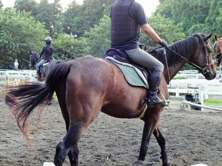 Horse riding club 1