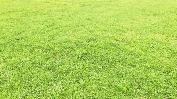 Bright lawn background