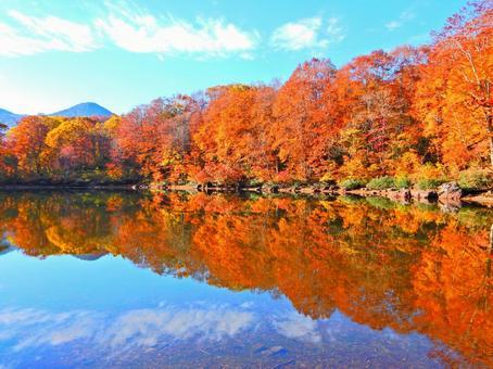 묘코 시리즈 (단풍과 하늘을 찍을 선인 연못)