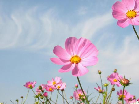 Cosmos extending in the sky
