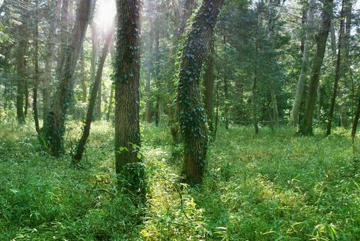 Trees_forest_111