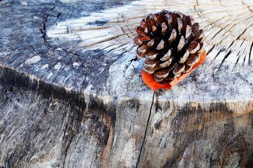 가을의 자연 고목과 솔방울 풍경