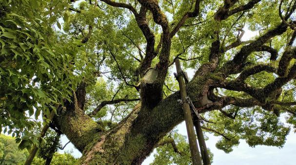 Fresh green tree 001