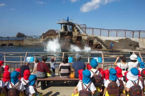 Kindergarten child dive show Sightseeing