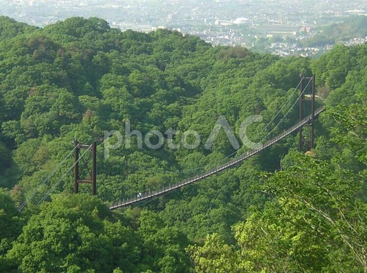 交野吊橋 星のブランコの写真
