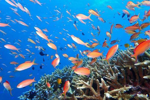 Sea of Okinawa