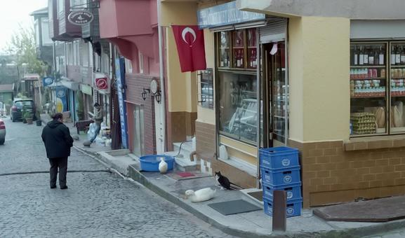 Turkish townscape store 3