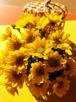 Yellow chrysanthemum ⑥