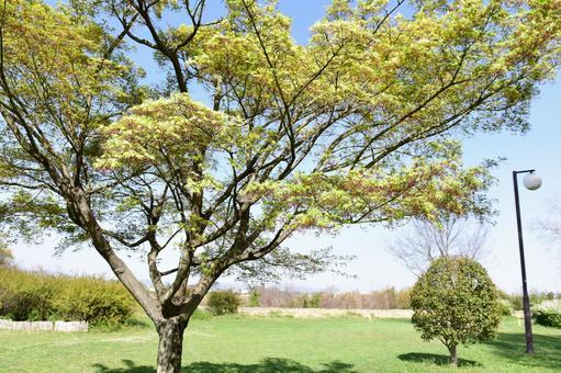 Green maple park