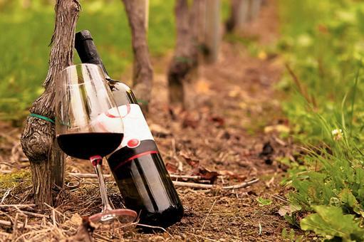 Vine and wine 4