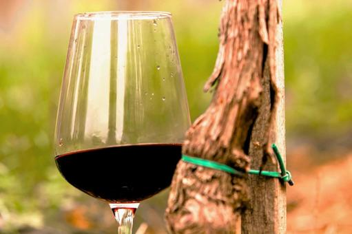 Vine and wine 5