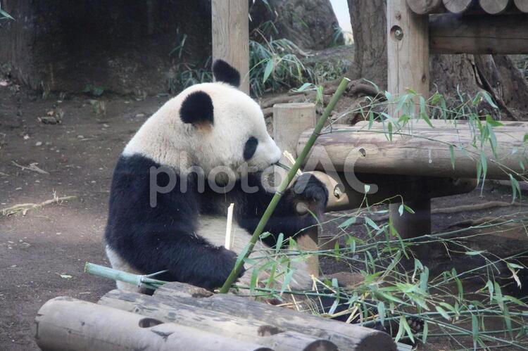 パンダ(食事)の写真