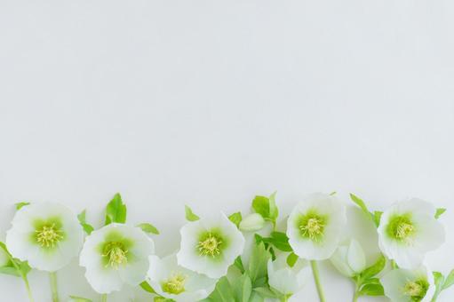 Neat white botanical frame