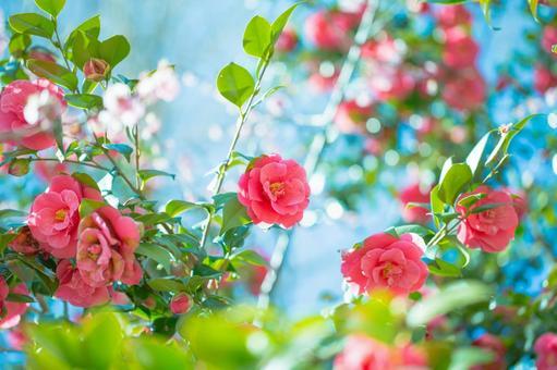 Fantastic flowers 164