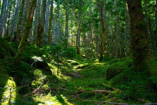 산 이끼가 무성한 숲