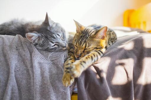 Good friends Bengal cat and Sabatra kitten _ sleep