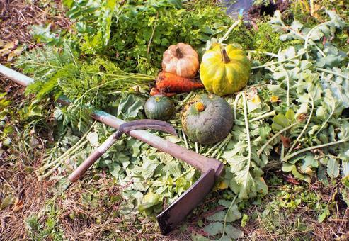 가을의 수확 호박 · 당근 ⑥